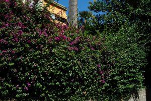 Bordighera (IM) – Via dei Giardini