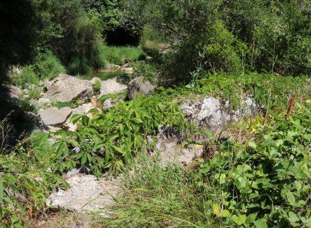Rocchetta Nervina (IM) – il rio Oggia