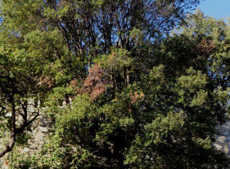 Imperia: Giardini Winter
