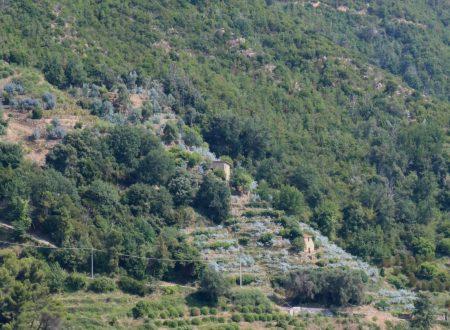 Vallebona (IM): una vista sulla vallata del torrente Sasso