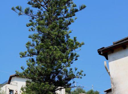 Ventimiglia (IM): Località Calandri