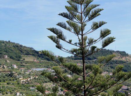 San Biagio della Cima (IM): una vista verso levante